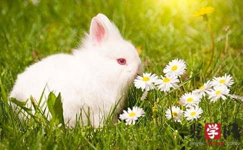 兔子的启示作文350字(精选3篇)